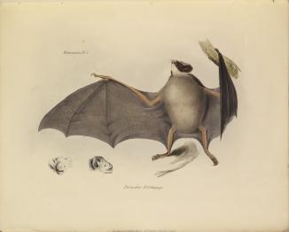 1838_zoology_f8_2_023.jpg