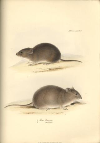 1838_zoology_f8_4_047.jpg