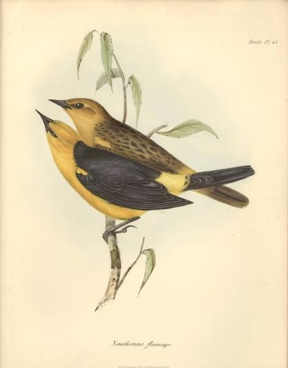 1841_zoology_f8_15_065.jpg